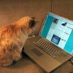 The blogging cat