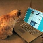 The blogging cat