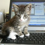 Cute kitten on keyboard