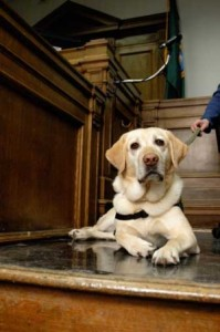 dogs-in-courthouse