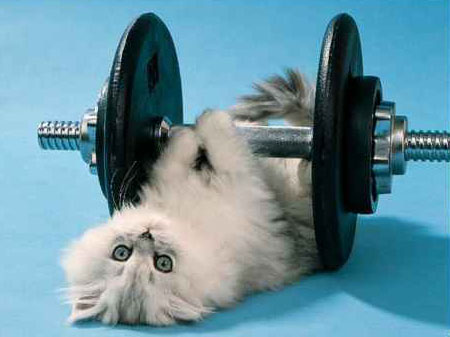 Kitten with barbell