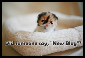 new-blog-kitten